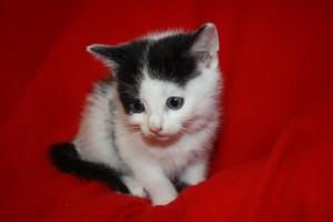 IMG_3563-300x200 6 Kleine Katzen im Karton