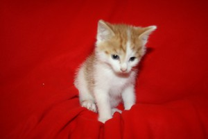 IMG_3572-300x200 6 Kleine Katzen im Karton