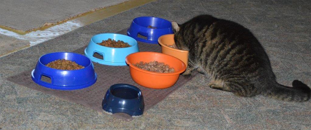Katzenfuettern Wie füttere ich meine Katze richtig?
