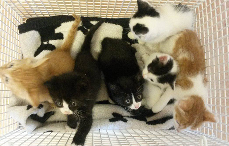 beitragsbild-6 Abgeschlossene Tierschutz-Projekte