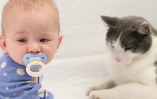 beitragsbild_baby-320x202 Katzenratgeber