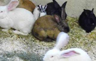 beitragsbild_kaninchen-320x202 Kleintierratgeber
