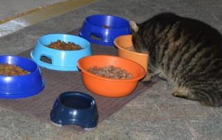 beitragsbild_katzenfutter-320x202 Katzenratgeber