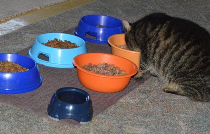 beitragsbild_katzenfutter Clickertraining mit Katzen