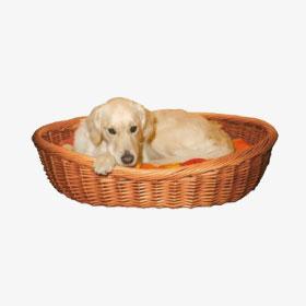 hundekorb-gross Ein Tierheimhund zieht ein