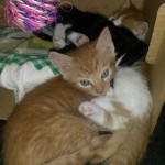 karton-150x150 6 Kleine Katzen im Karton