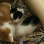 karton1-1-150x150 6 Kleine Katzen im Karton