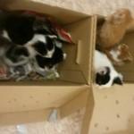 karton3-1-150x150 6 Kleine Katzen im Karton