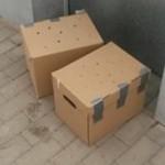karton4-1-150x150 6 Kleine Katzen im Karton