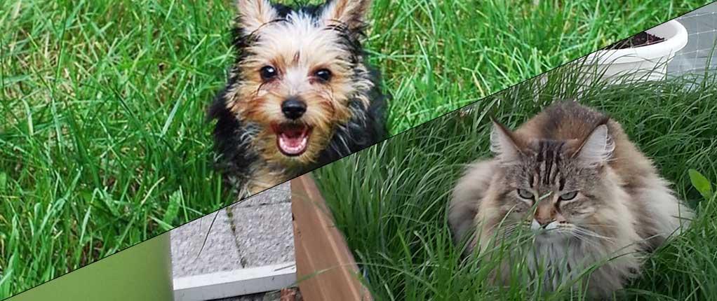 nierenversagen-hunde-katzen Chronische Niereninsuffizienz (CNI)