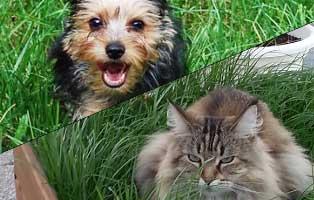 ratgeber-hunde-katzen-nierenversagen Katzenratgeber