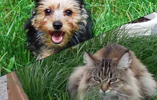 ratgeber-hunde-katzen-nierenversagen Hunderatgeber