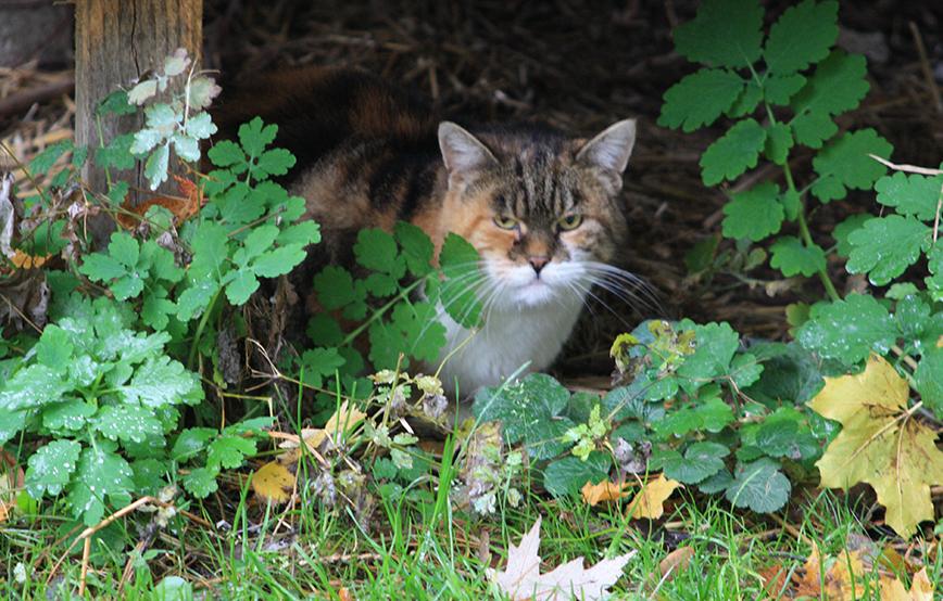 beitragsbild-2 Katzenstation Netzschkau
