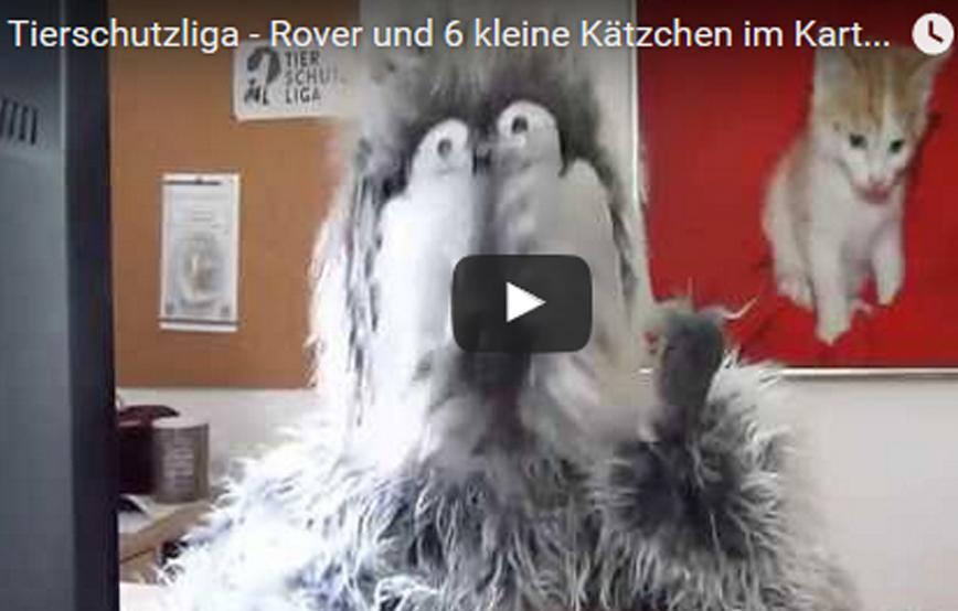 beitragsbild_kartonkatzen1 Tierschutz mit ROVER