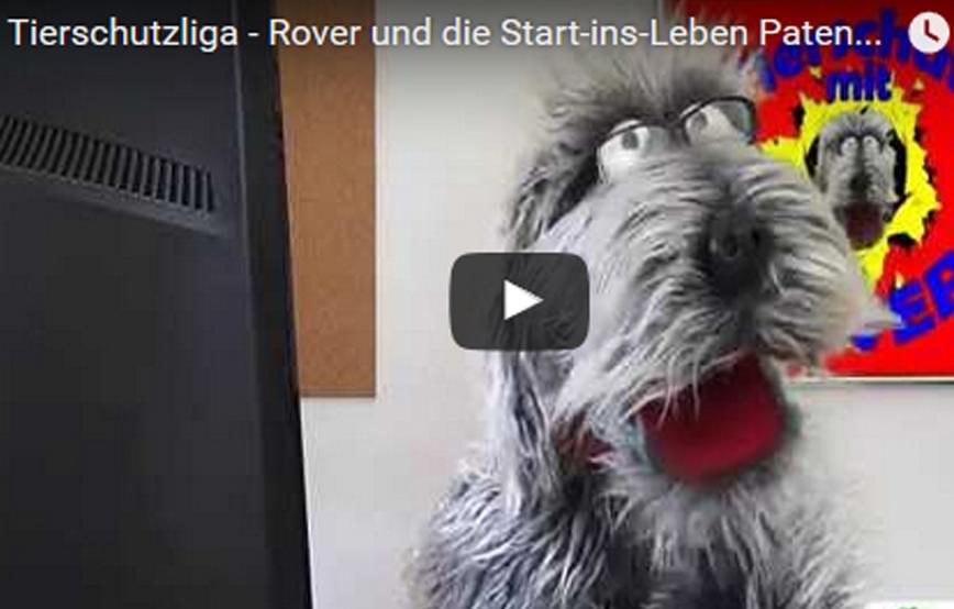 beitragsbild_roverundStart1 Kinder-Club Tierschutz