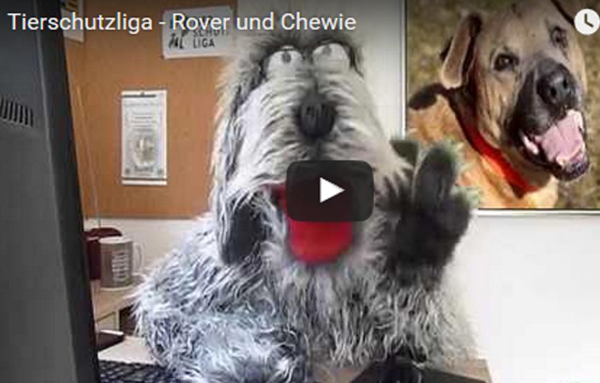 beitragsbild_roverundchewie1 Tierschutz mit ROVER