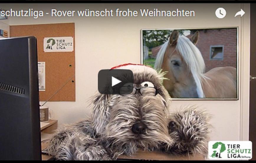 beitragsbild_roverundweihnachten Kinder-Club Tierschutz