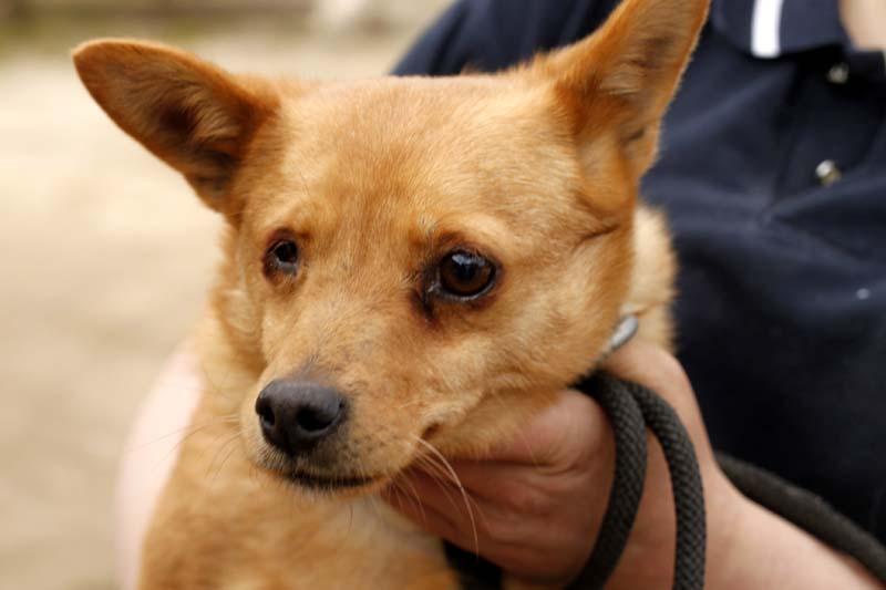 Aufnahmepatenschaft-brauner-hund-Flora-mit-hand Diese Fellnasen konnten wir zu uns ins Dorf holen