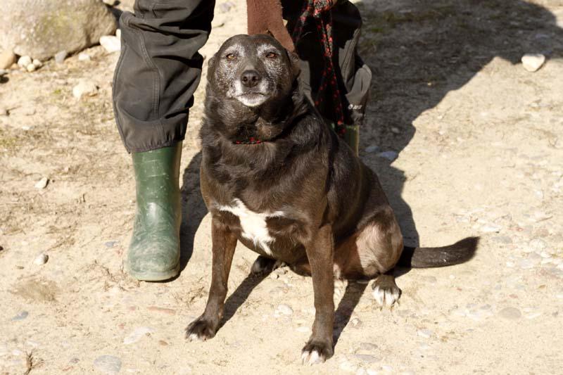 Aufnahmepatenschaft-schwarzer-hund-Kathy-an-leine Diese Fellnasen konnten wir zu uns ins Dorf holen