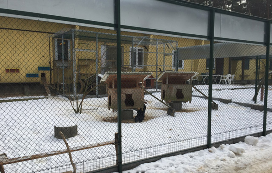 Katzengehege winter schnee Tierschutzligadorf