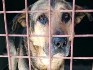 Suche-Aufnahmepaten-schwarz-brauner-hund-hinter-gitter-300x225 Diese Fellnasen konnten wir zu uns ins Dorf holen