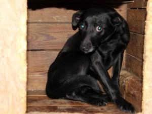 Suche-Aufnahmepaten-schwarzer-Hund-im-Holzhaus-300x225 Diese Fellnasen konnten wir zu uns ins Dorf holen