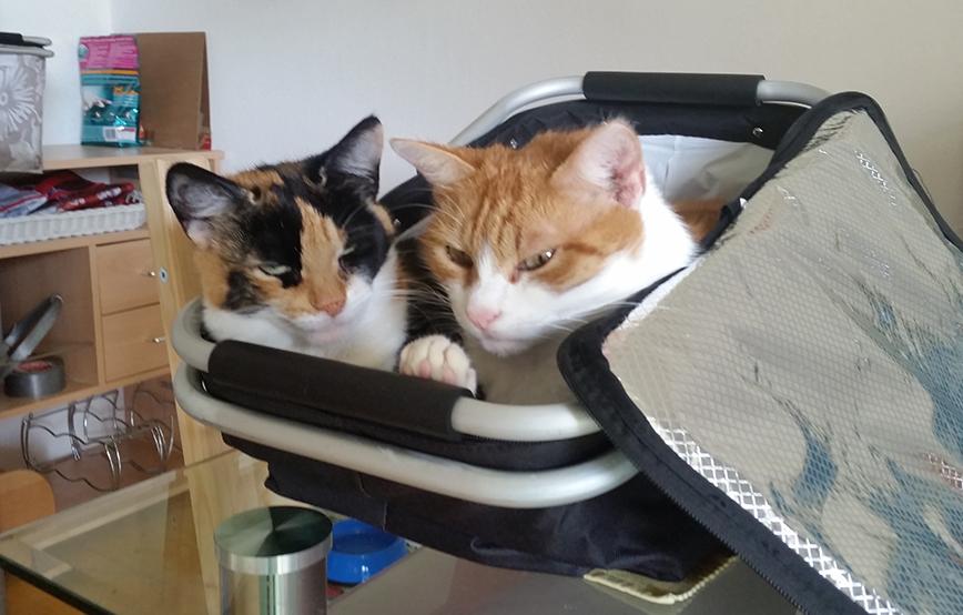 Katzen Tom und HIlde im Korb