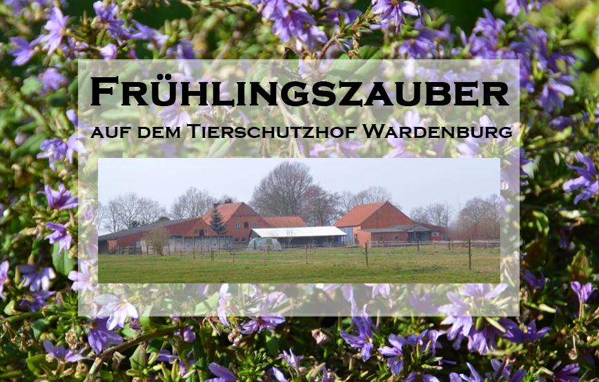 beitragsbild-23 Unterstützen Sie das Tierheim Wollaberg