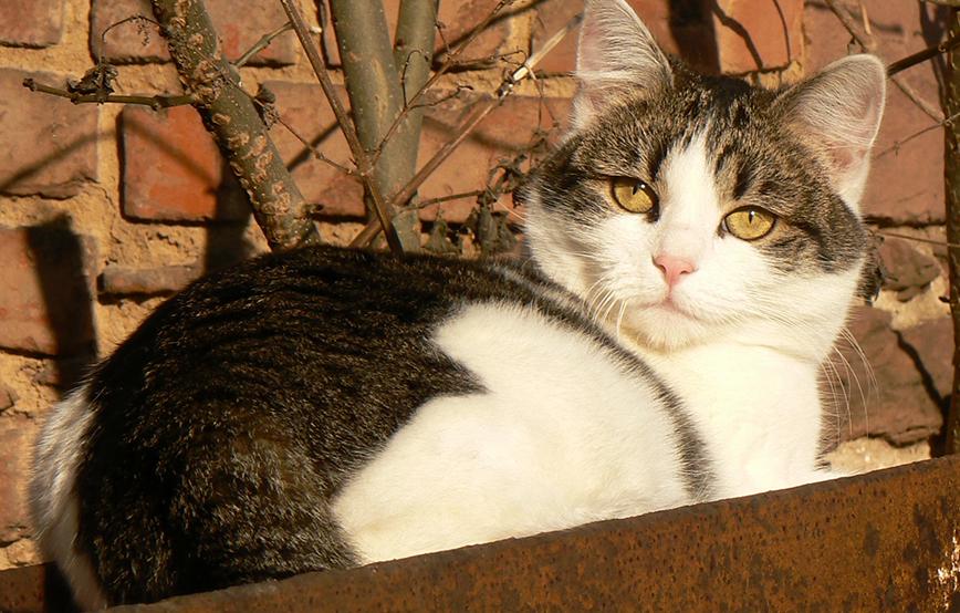 Beitragsbild-Katze Ida liegt in der Sonne