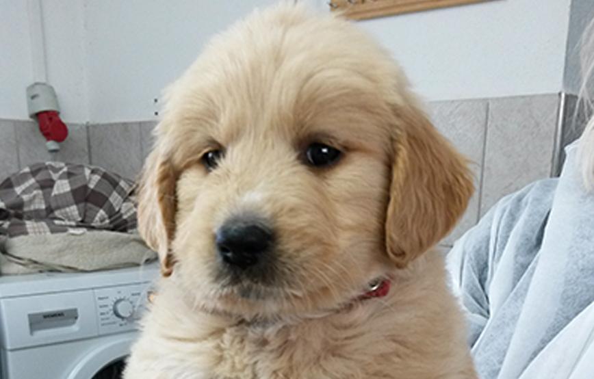 Beitragsbild Welpe auf Arm in Waschküche Hundewelpenimpfung