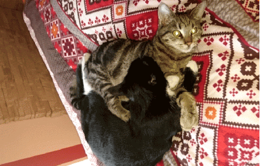 zwei-Katzen-kuscheln-auf-Bett Aktuelles - Katzenstation München