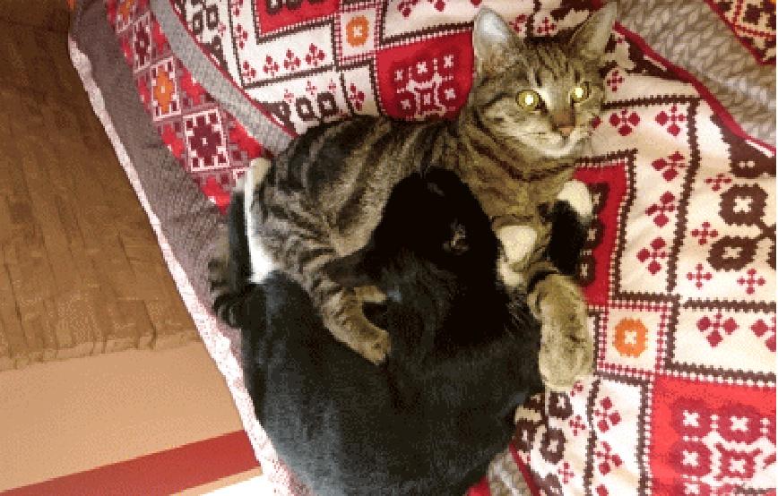 zwei Katzen kuscheln auf Bett