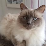 Bailey-150x150 Schicken Sie uns Ihre schönsten Tierfotos