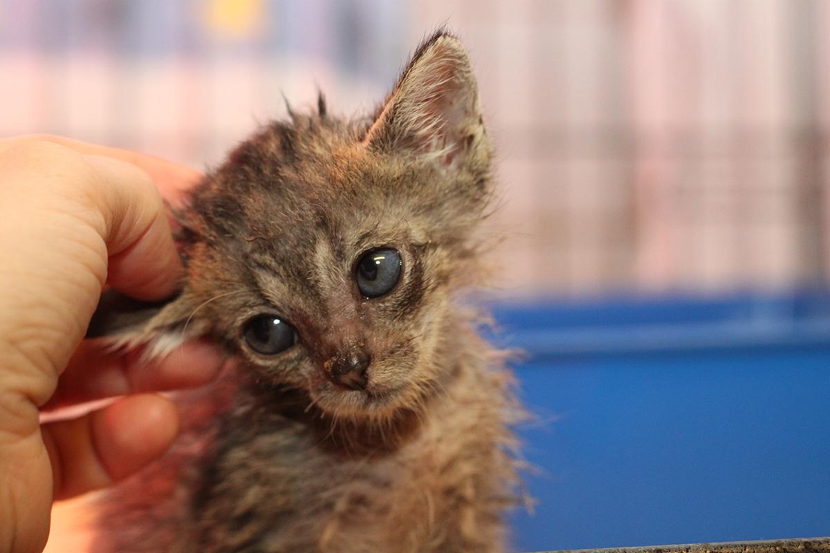 Katze-Baby-Krank-Tierschutzligadorf-Stange-IMG_9733 Katzenelend - Wir brauchen Hilfe