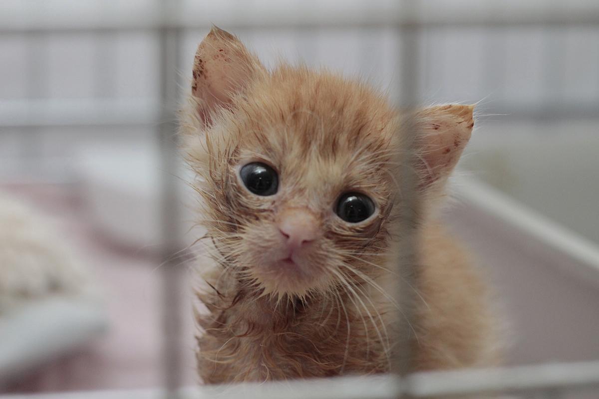 Katze-Baby-Stange_MG_8405 Katzenelend - Wir brauchen Hilfe