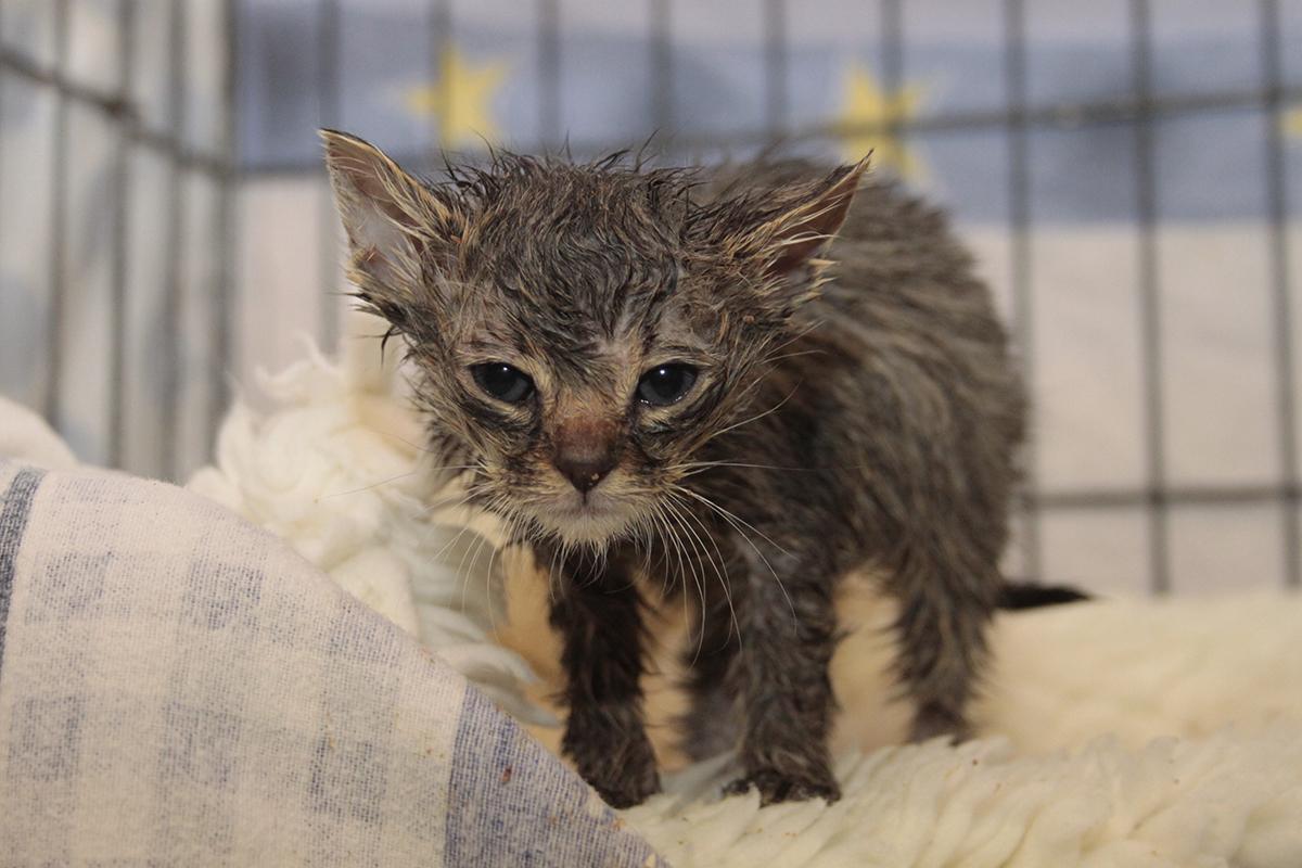 Katze-Baby-krank-Stange_MG_8355 Katzenelend - Wir brauchen Hilfe