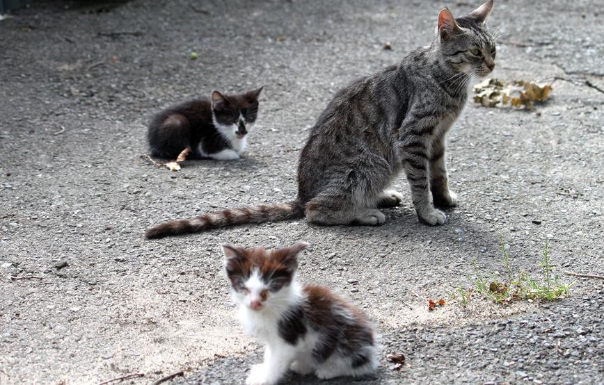 Katze mit Katzenkinder auf Schotterboden Laub