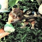 Leserbilder-Eichhörnchen-klein-150x150 Schicken Sie uns Ihre schönsten Tierfotos