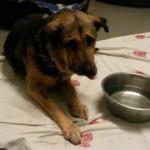auslandshunde-ankunft-einzel-decke-150x150 5 Auslandshunde im Tierschutzliga-Dorf