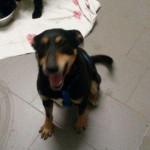 auslandshunde-ankunft-einzel-fliesen-sitzt-150x150 5 Auslandshunde im Tierschutzliga-Dorf