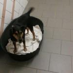 auslandshunde-ankunft-einzel-korb-150x150 5 Auslandshunde im Tierschutzliga-Dorf