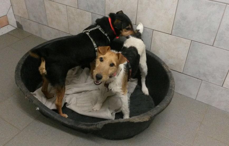 beitragsbild-auslandshunde-ankunft-einzel-korb-spielen Aufnahmepatenschaft für Auslandshunde