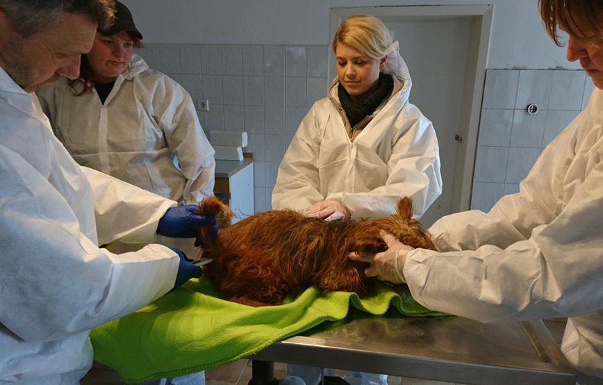beitragsbild beschlagnahmung hund terrier behandlung wollaberg