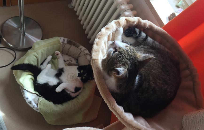 beitragsbild-katzen-peppi-james-zuhause-gefunden-tierschutzliga-IMG_2421 Tierische Geschichten - Katzenstation München