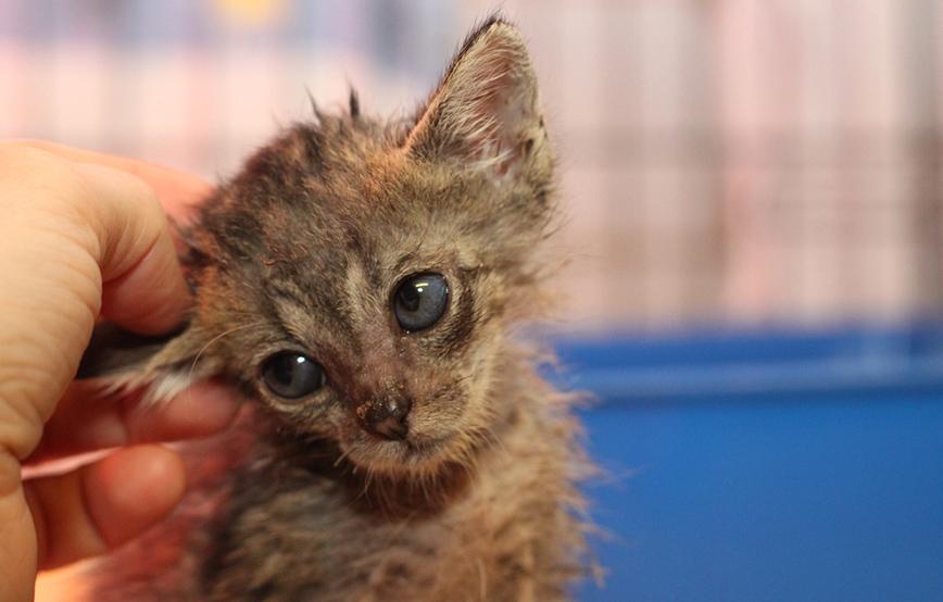 beitragsbild-katzenkastration-kranke-katze Katzenkastration - warum sie so wichtig ist
