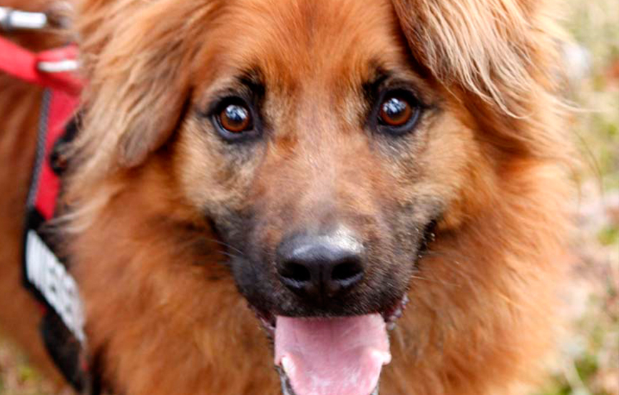 beitragsbild knut hund leine regeln portrait Tierschutzliga dorf