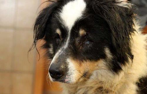 beitragsbild-kolja-hund-polen-verlies-befreit-porträt-IMG_3628 Unterstützen Sie das Tierschutzliga-Dorf
