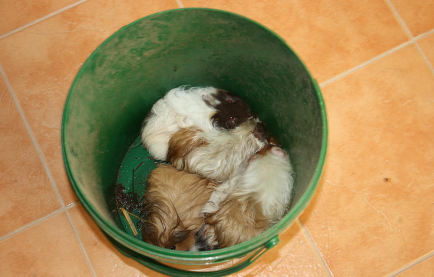 beitragsbild meerschweinchen entsorgt eimer unterheinsdorf IMG_4297