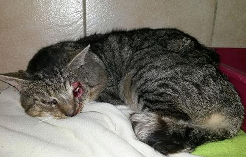 beitragsbildkater-angefahren-verletzt-tisch-Tierschutzliga-dorf Unterstützen Sie das Tierschutzliga-Dorf