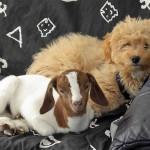 freddy-und-elvis-150x150 Schicken Sie uns Ihre schönsten Tierfotos